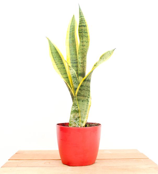 Catalogo tropicalia de plantas tropicalia estudio for 5 nombres de plantas ornamentales