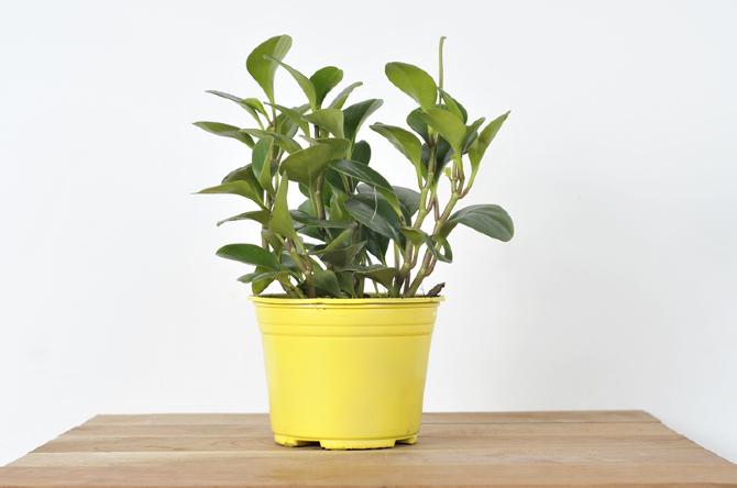 Catalogo tropicalia de plantas tropicalia estudio - Plantas de sol y sombra ...