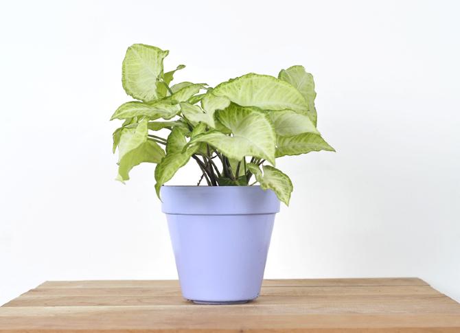 Plantas De Interiores Nombres