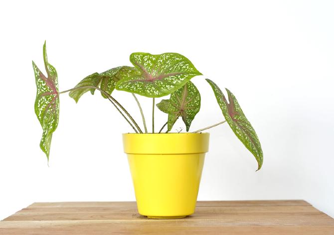 Catalogo tropicalia de plantas tropicalia estudio - Plantas de jardin nombres ...