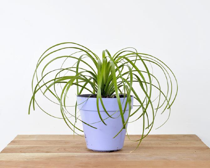 Catalogo tropicalia de plantas tropicalia estudio - Plantas exterior sol ...