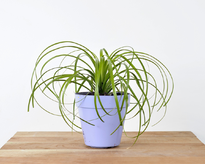Plantas de exterior de sombra good exterior with plantas for Plantas sombra exterior